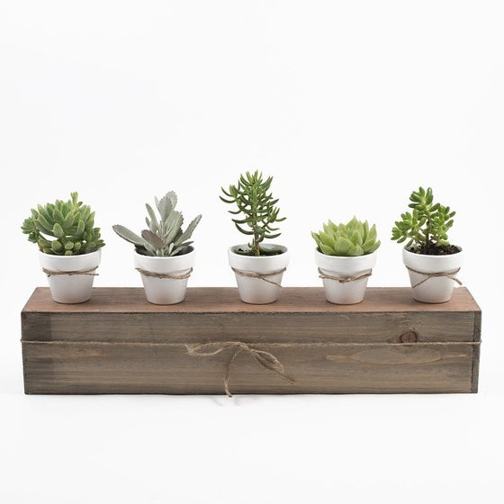 Image of SUCCULENT FLIGHT