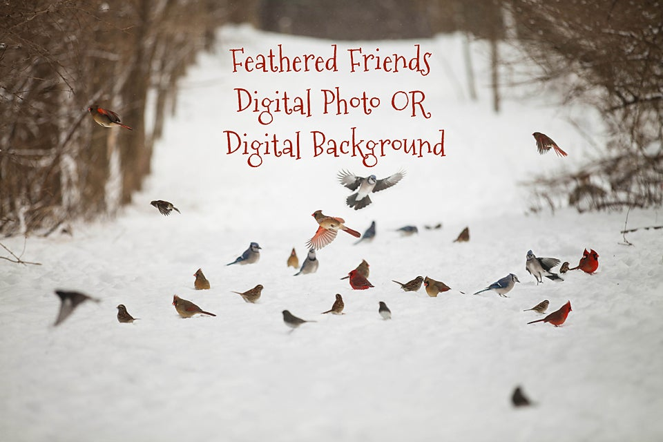 Image of Feathered Friends Digital Background/Digital Photo