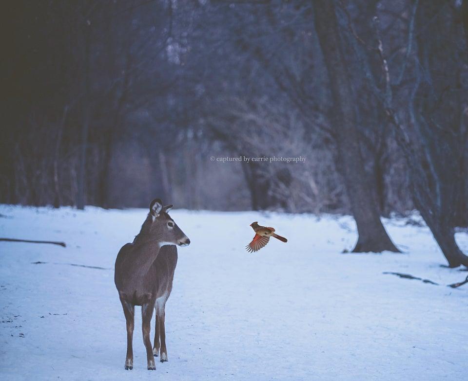 Image of Winter Cardinals Overlay