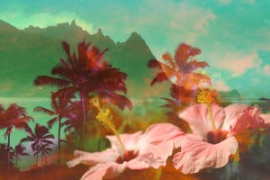 Image of Tropical Dream + Lauren Taylor Zipper Clutch