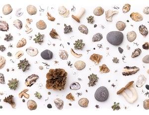 Image of Stone Mushroom