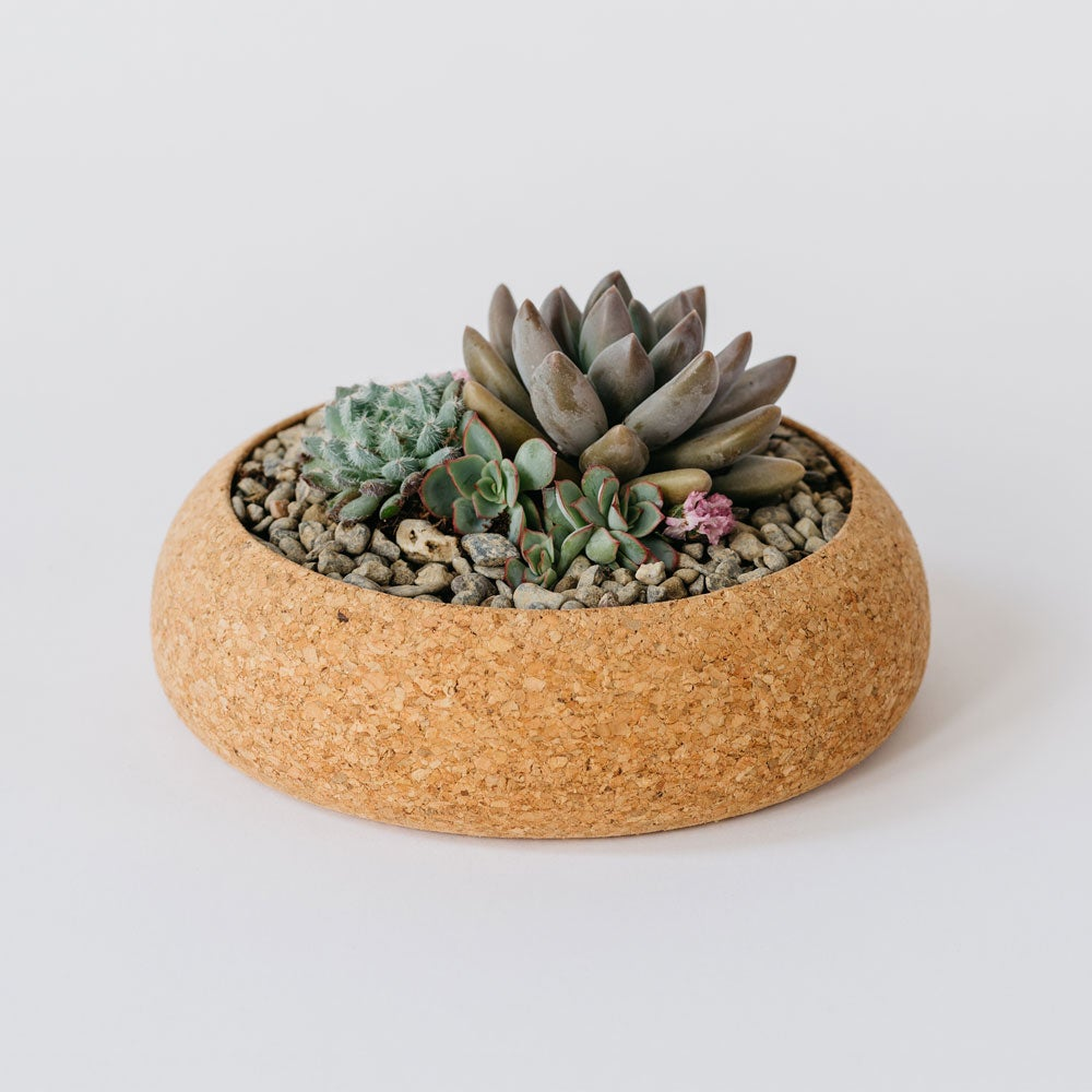 Image of Large Cork Planter