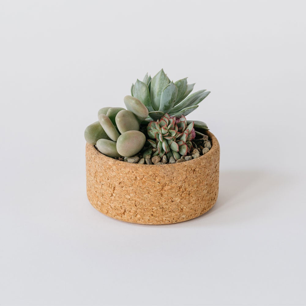 Image of Small Cork Planter