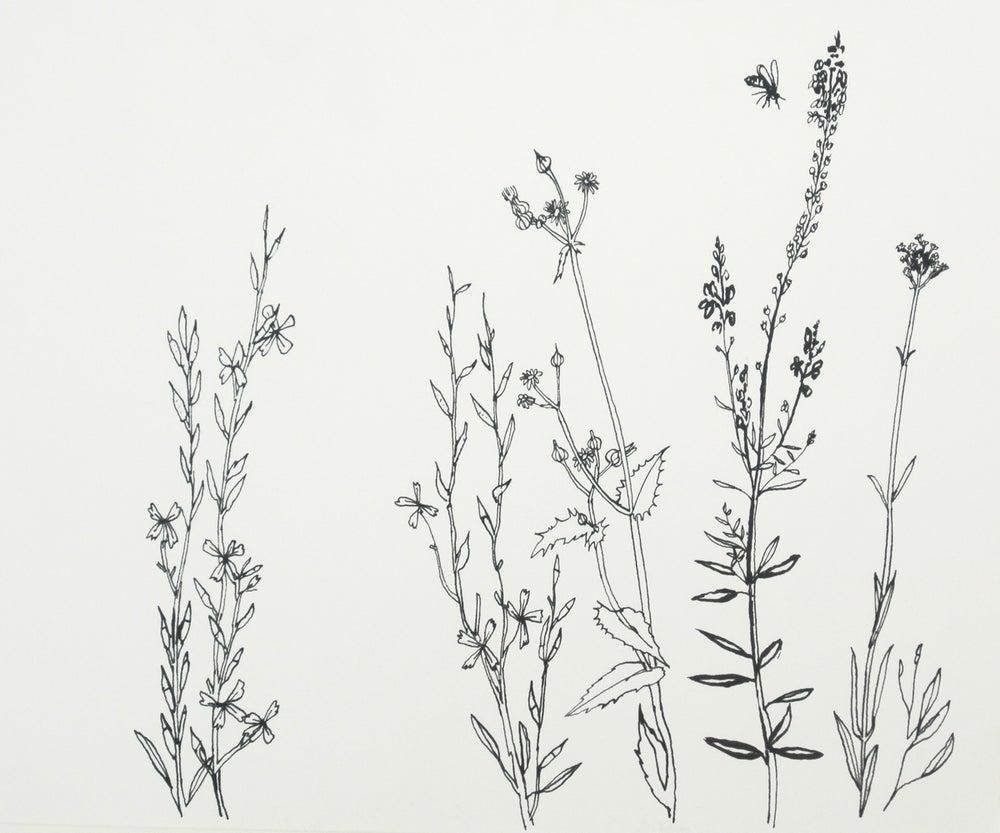 Image of Wiltshire weeds