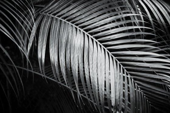 Image of Hiwa B&W Zipper Clutch