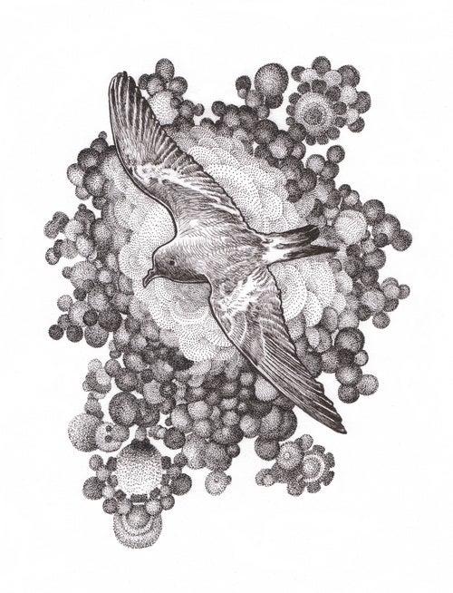 Image of Birds of Newfoundland