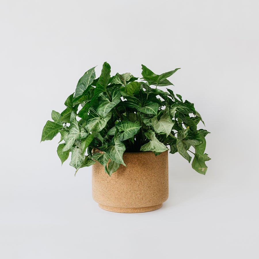 Image of Large Indoor Cork Planter