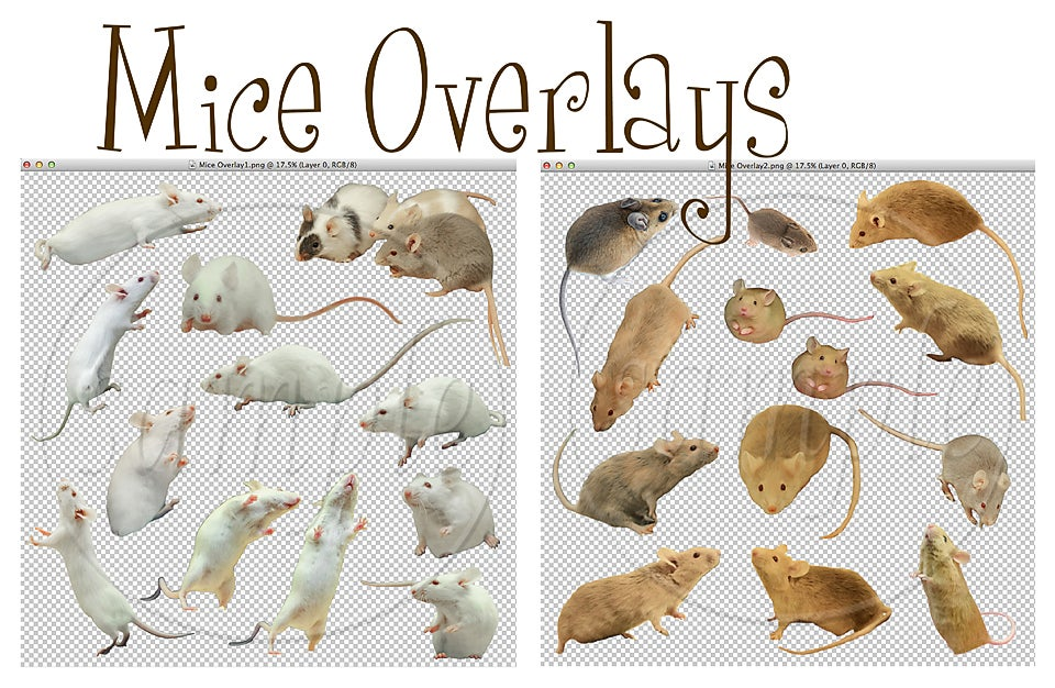 Image of Mice Overlays