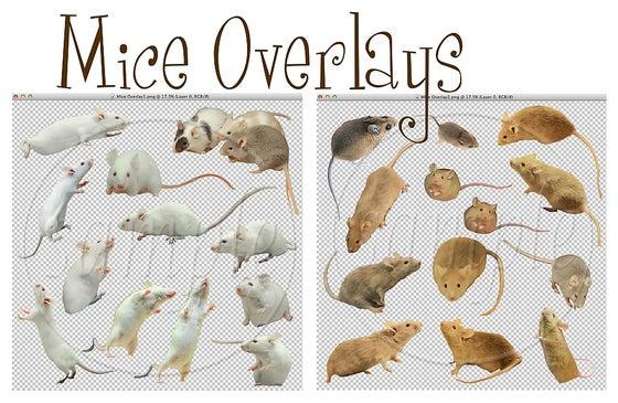 Image of Mice Overlays