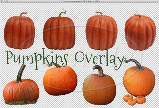 Image of Pumpkins Overlay