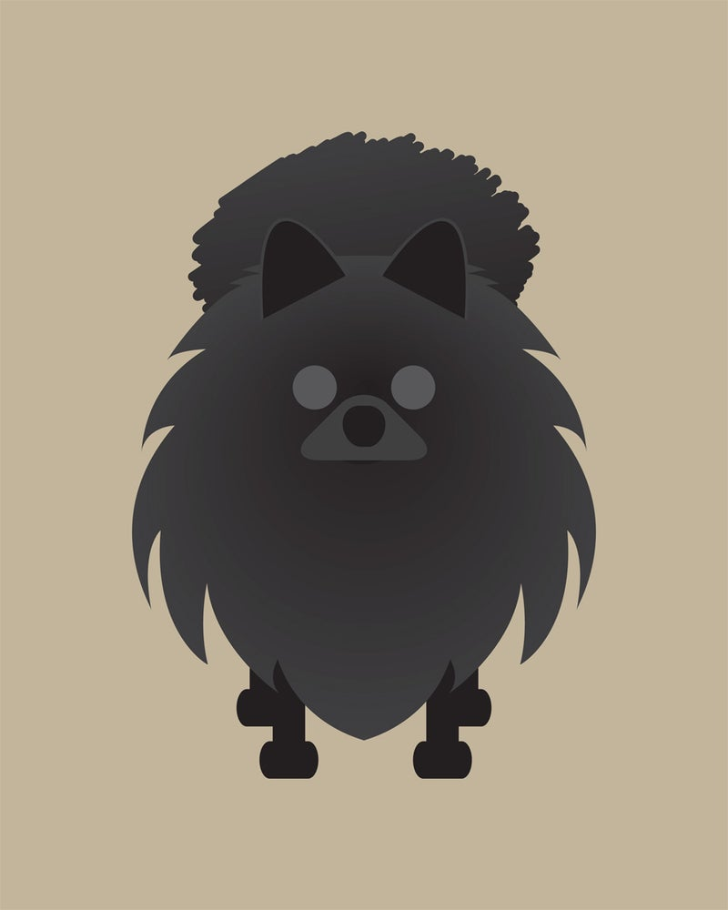 Image of Pomeranian Collection