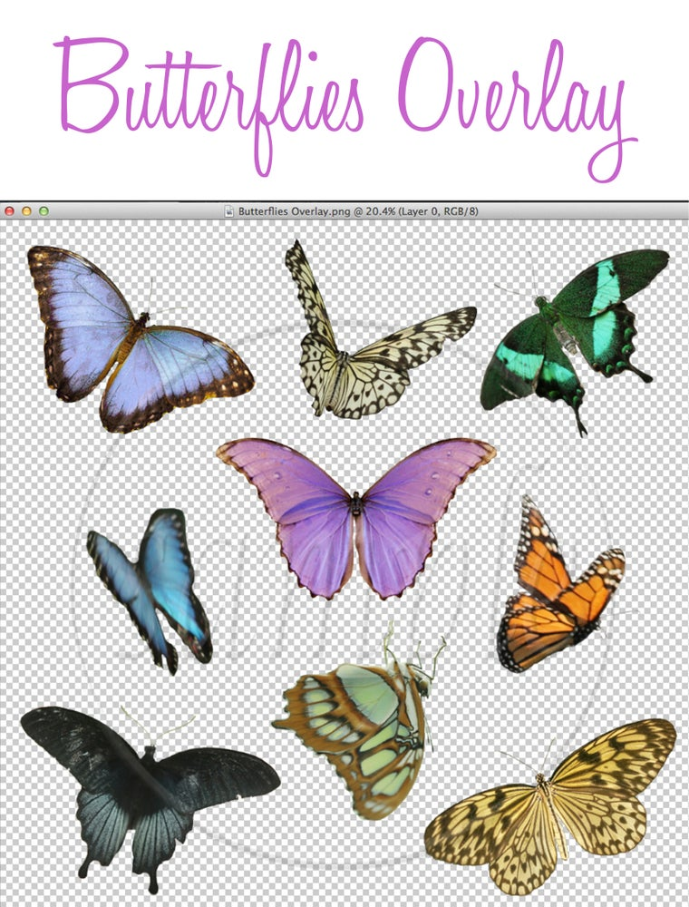Image of Butterflies Overlay