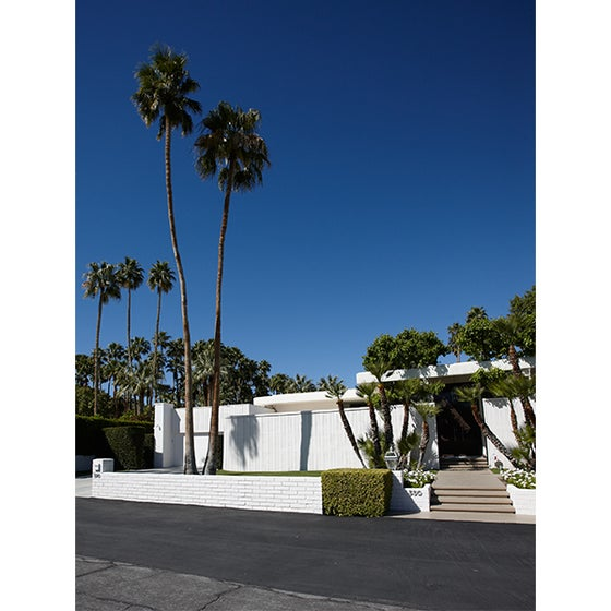 Image of 39 Palms