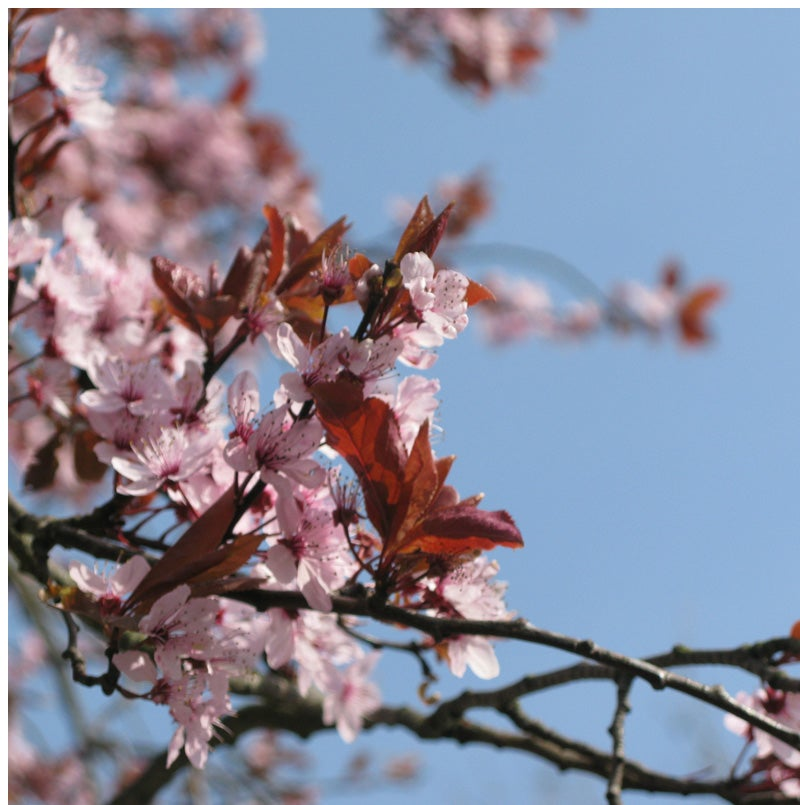 Image of Blossom (giftcard)