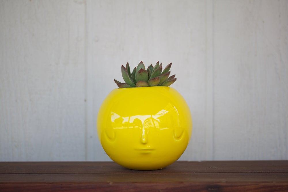 Image of pothead by yoskay yamamoto (glossy yellow)