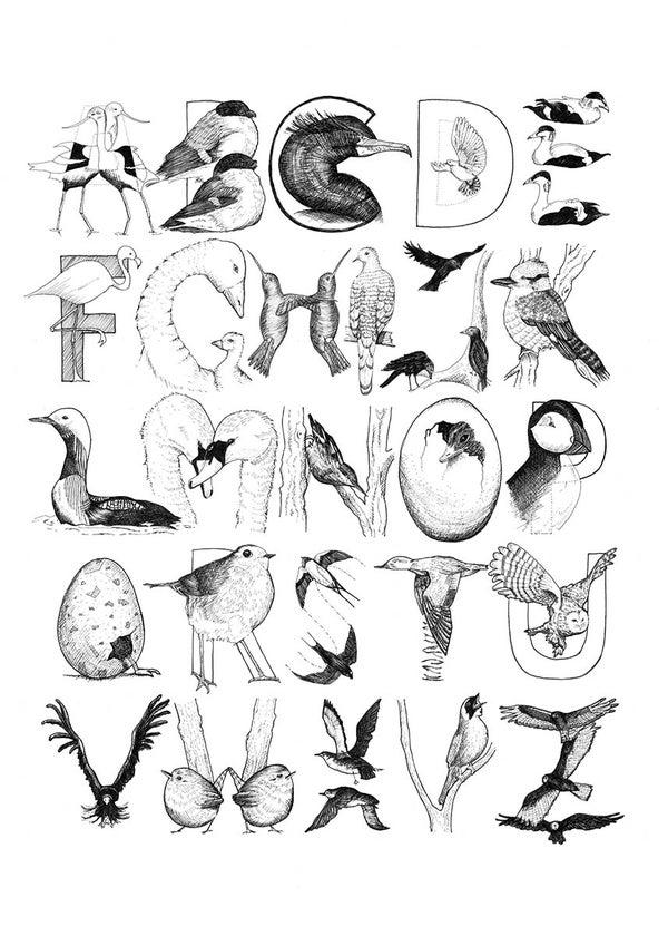 Image of Alpha Birds