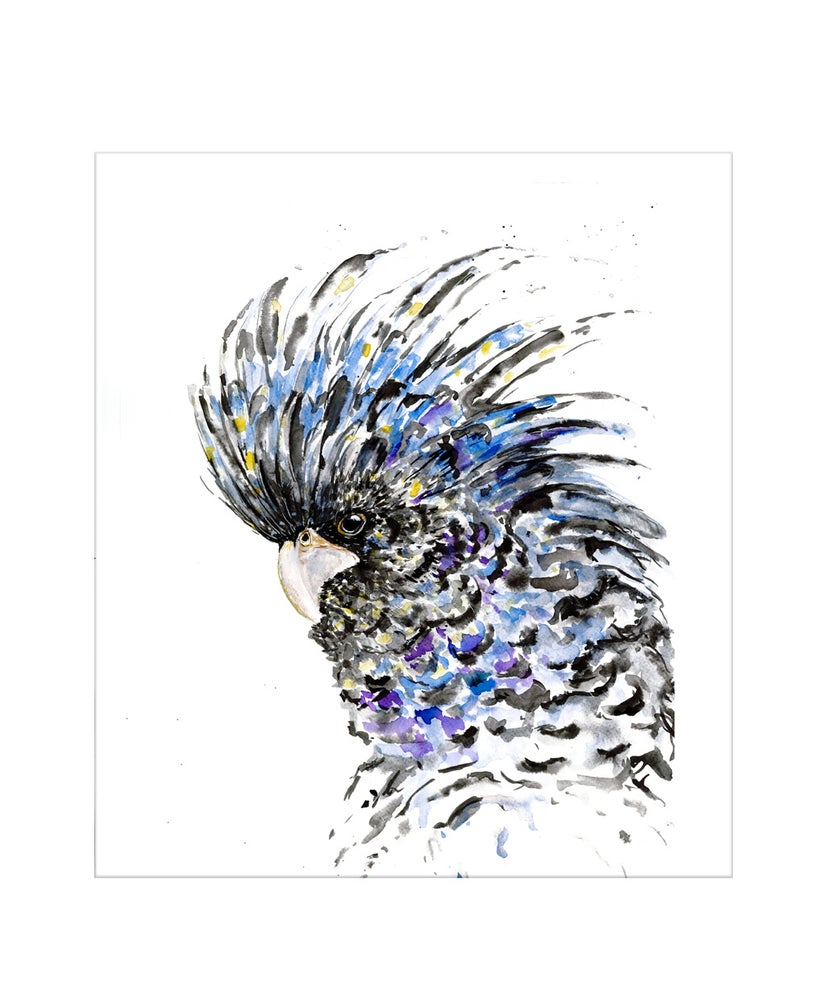 Image of Black Cockatoo