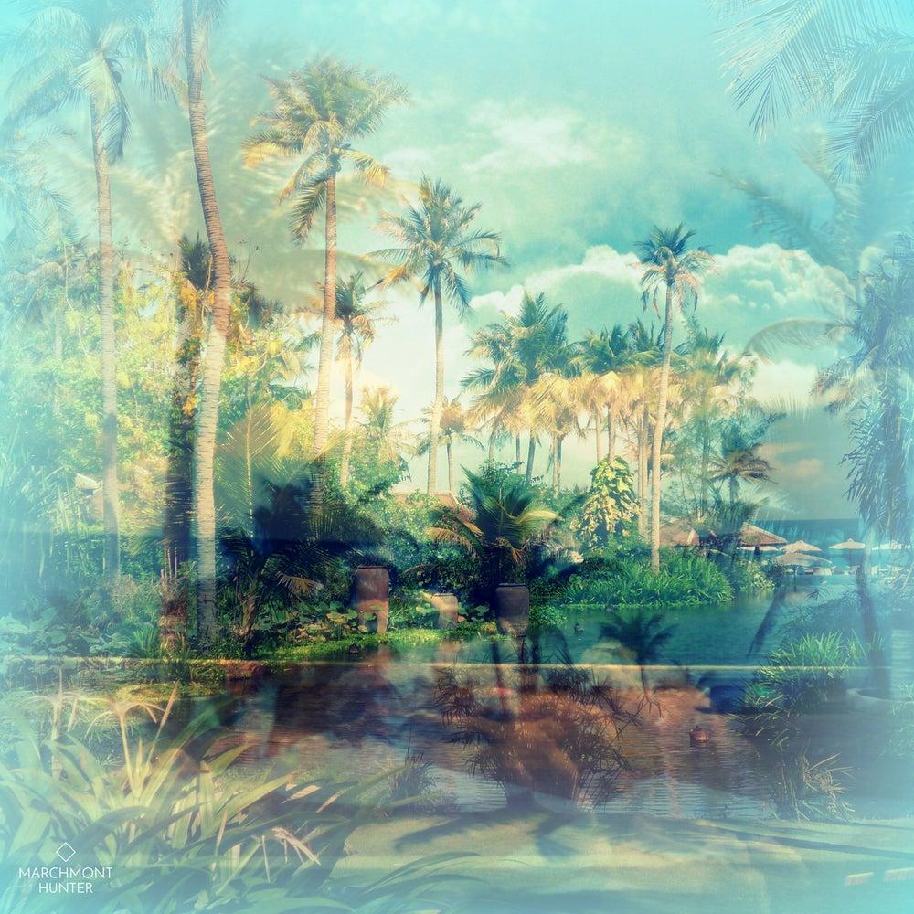 Image of Paradise Palms Silk Chiffon Scarf