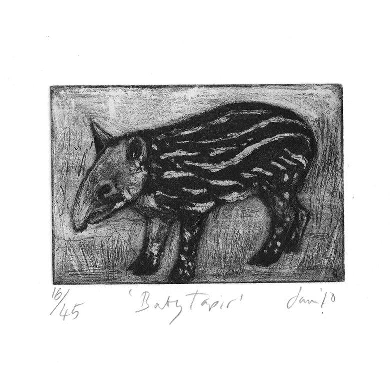 Image of 'Baby Tapir'