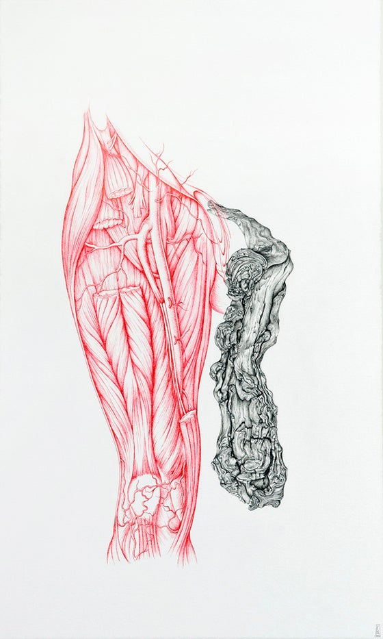 Image of Surgical Anatomy of the Femoral Artery