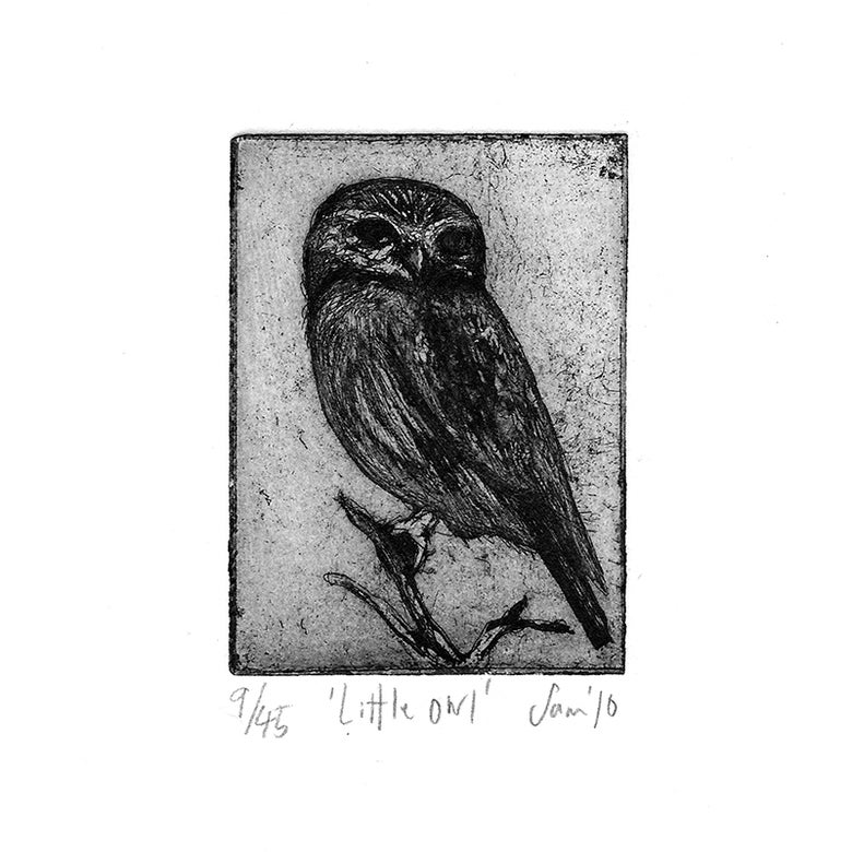 Image of 'Little Owl' - Etching