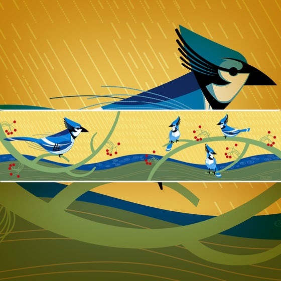 Image of Blue Jays