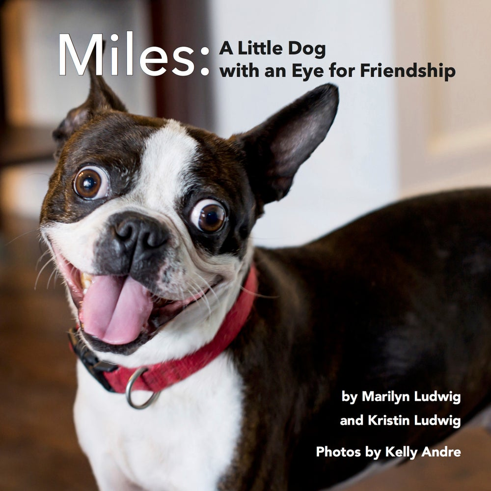 Image of Miles: A Little Dog with an Eye for Friendship