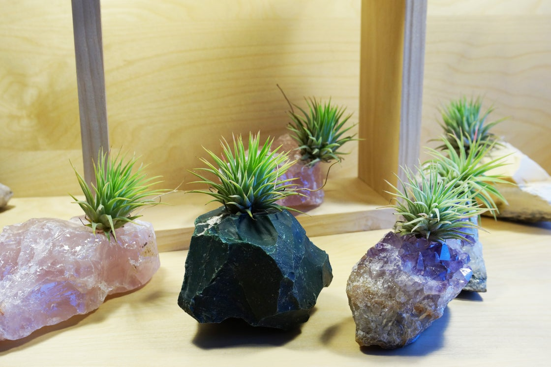 Image of Crystal Air Plants Range