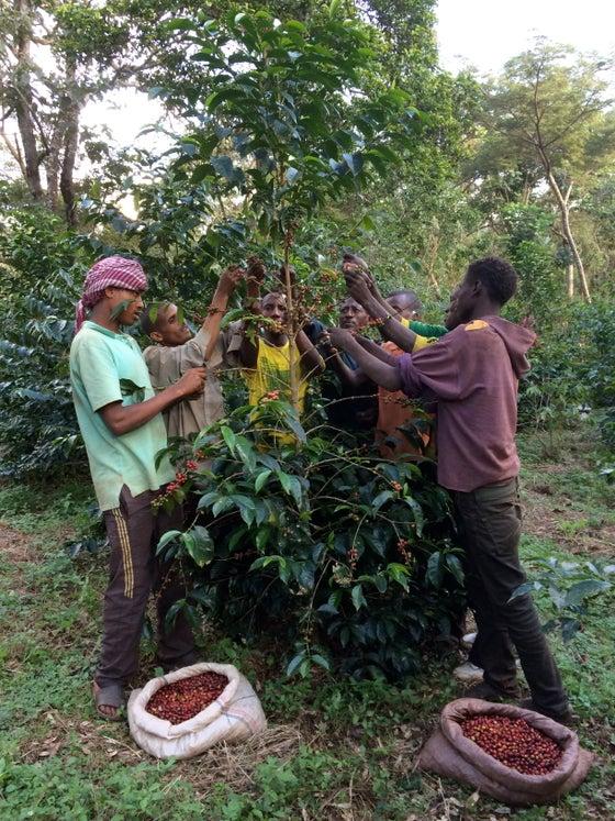 Image of Ethiopia Suke Quto