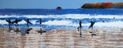 Image of Bright Day at Polzeath, Cornwall