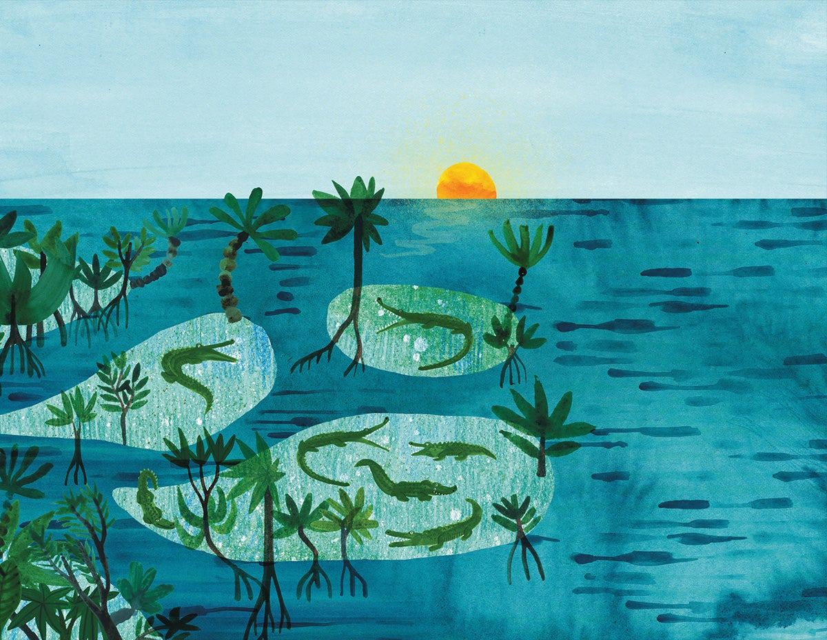 Image of Mangroves