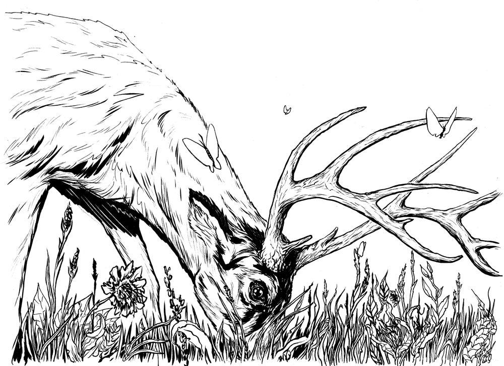 Image of Buck Grazing - original hand inked art