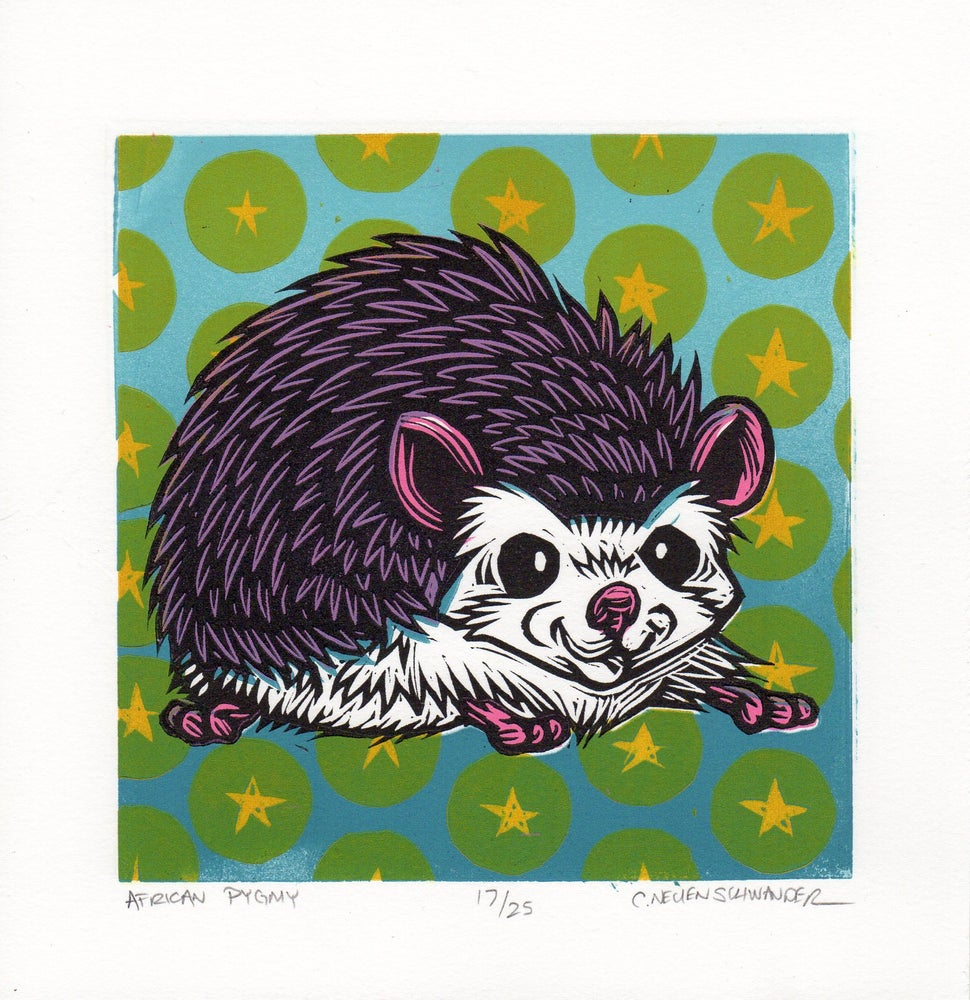 Image of African Pygmy Hedgehog