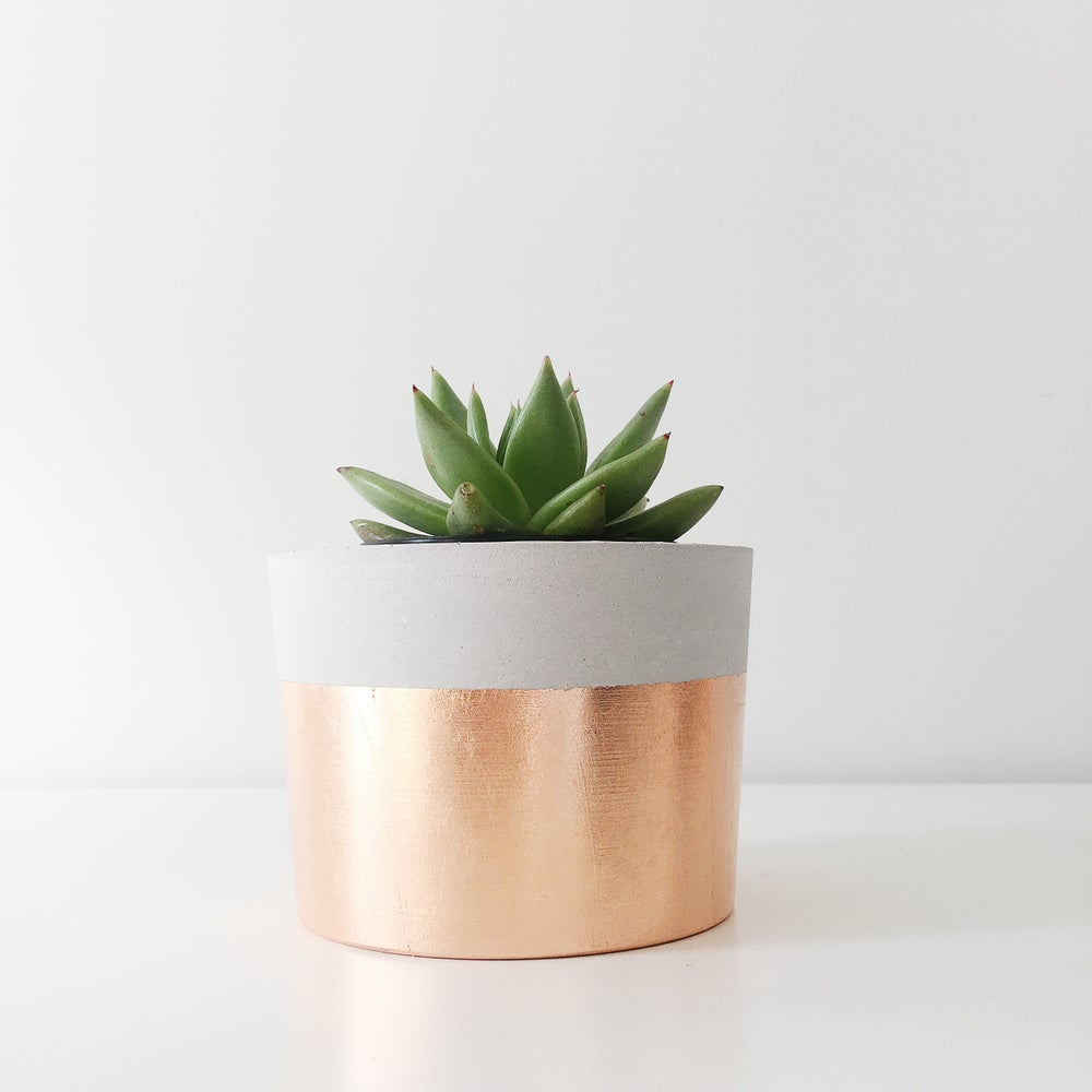 Coral & Herb — Planter  Copper Dipped