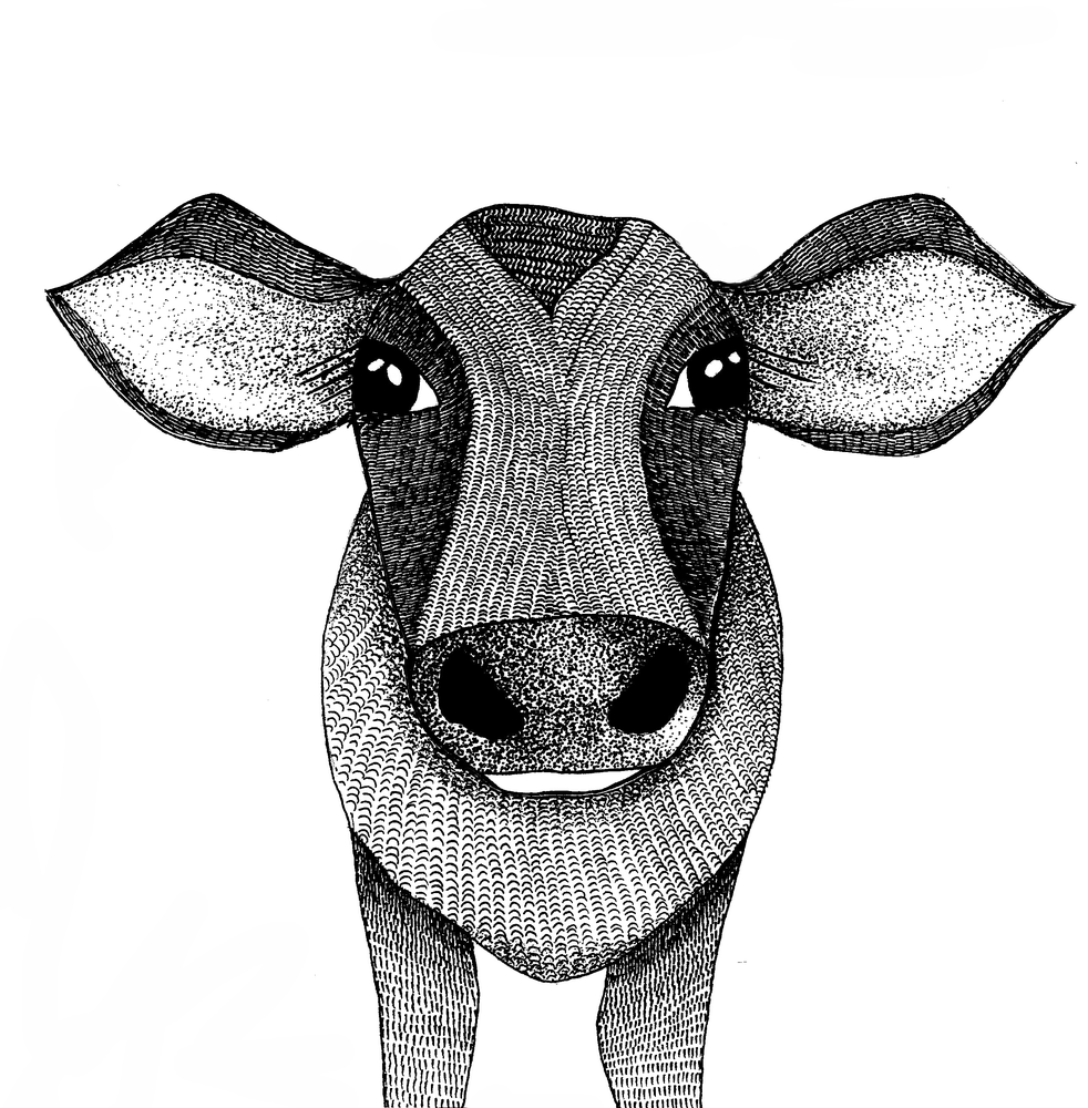 Image of Cow 2
