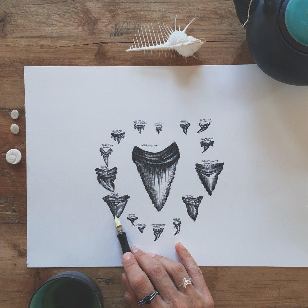 Image of Shark Tooth Mandala ~ Archival Print