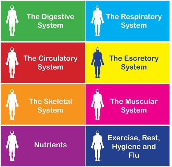 ESL Worksheets u2014 Trivia Science Fun - The Human Body Quiz