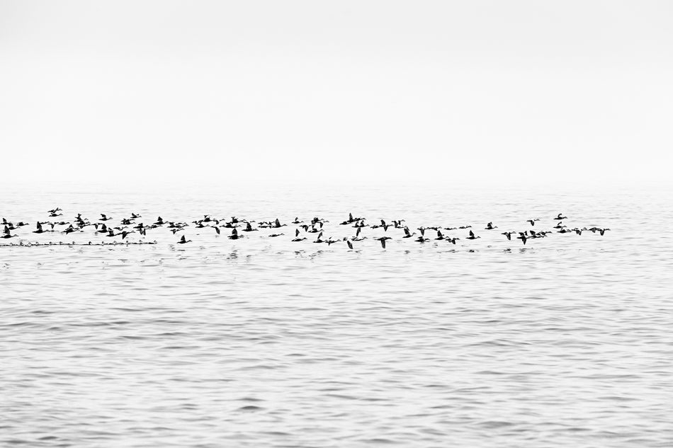 Image of Wild Birds