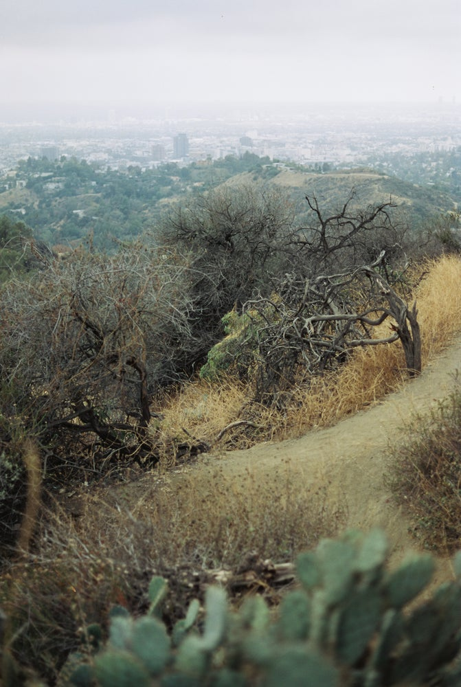 Image of Griffith Park