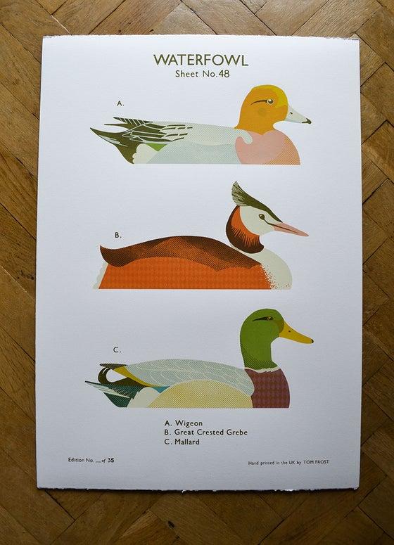 Image of Waterfowl School Chart
