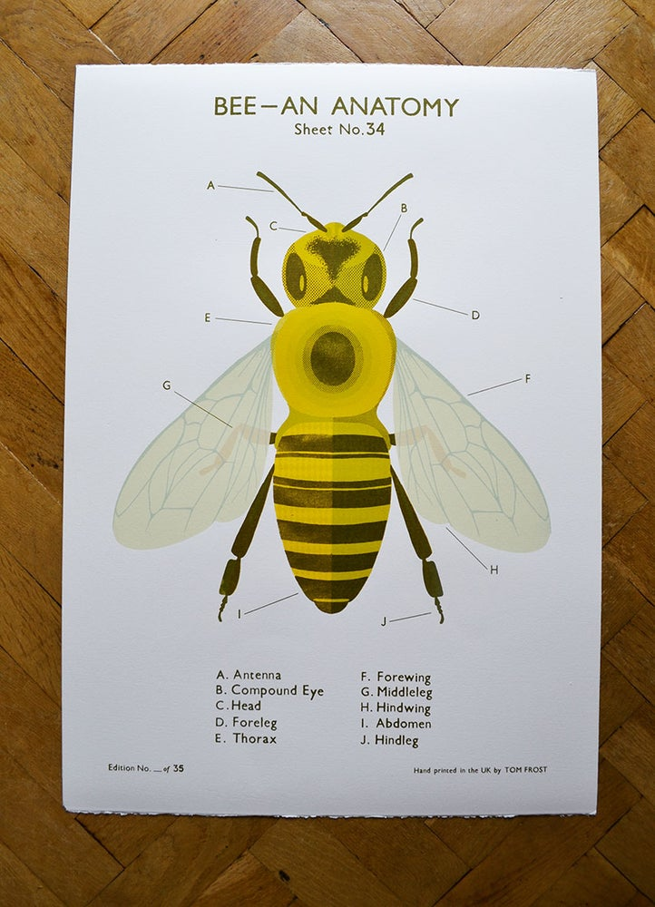 Image of Bee School Chart