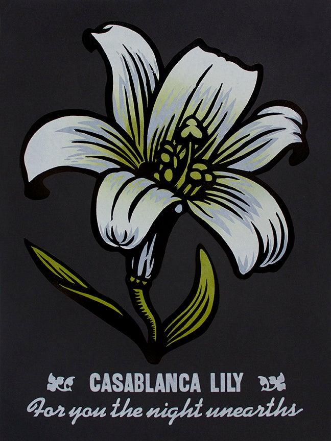 Image of Casablanca Lily