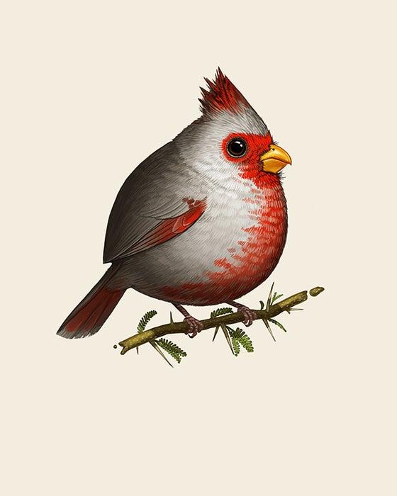 Image of Desert Cardinal (male variant)