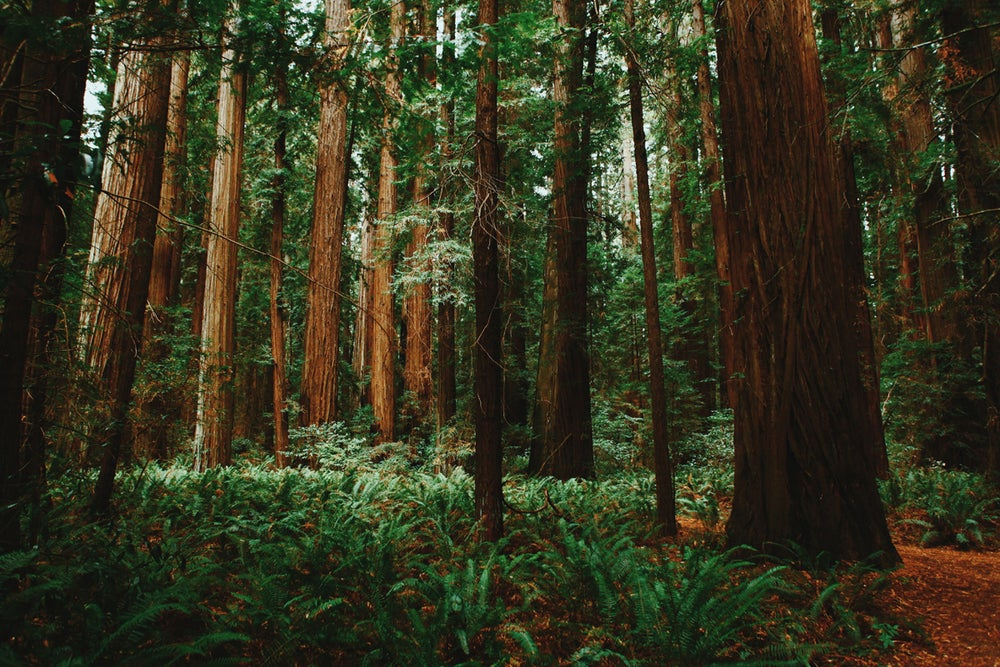 Image of Forest Moon of Endor photograph print