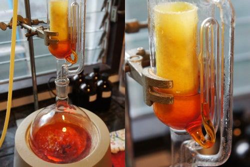 Image of TURMERIC spagyric tincture - alchemically enhanced plant extraction