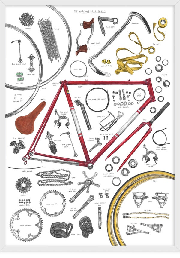 Image of Anatomy Of A Bike