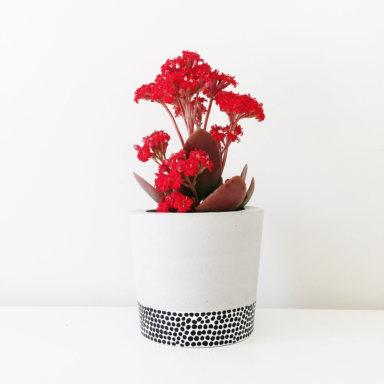 Image of Planter - Tiny Dots