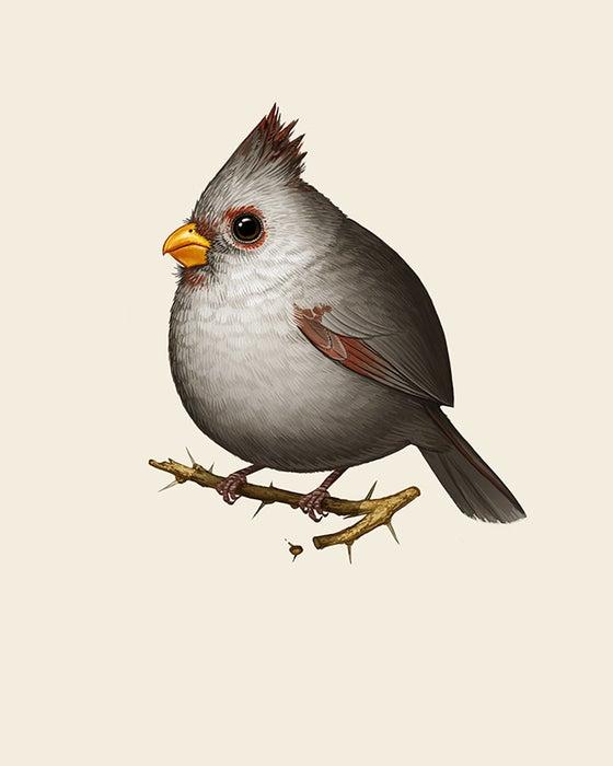 Image of Desert Cardinal (female)