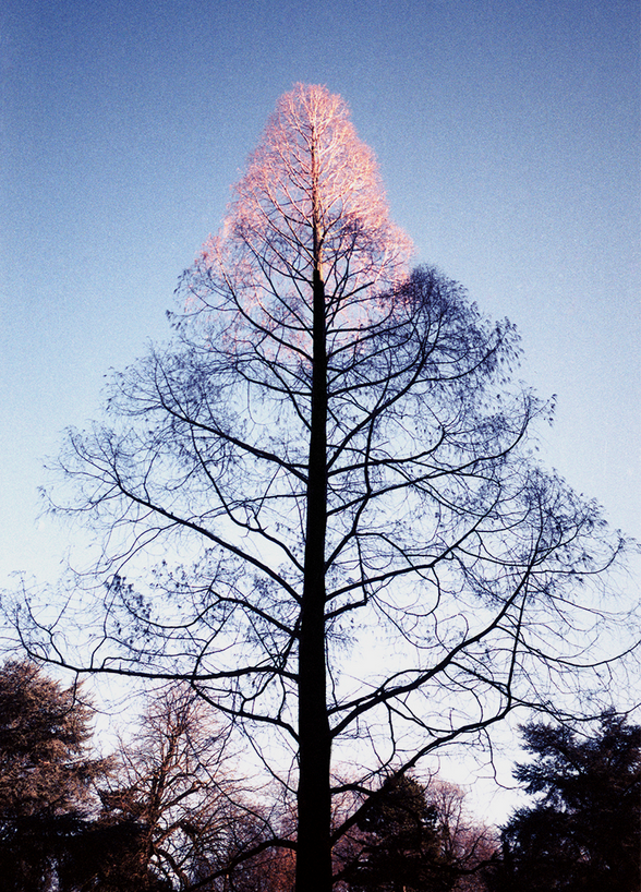Image of edition 'tree g'