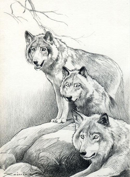 """Image of """" Wolf Pack """" ( original drawing )"""
